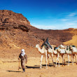 Camels caravan in Sahara Desert, Algeria — Stock Photo