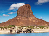 Elephants in african savanna — Stock Photo