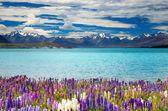 Lake Tekapo, New Zealand — Stock Photo