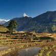 Himalayan landscape - Stock Photo