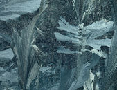 Frost pattern. — Stock Photo