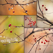 Autumn branches — Stock fotografie