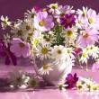 Still life with flowers kosmeya - Stock Photo