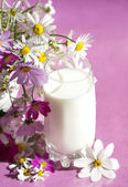 Chamomile and milk in a glass — Stock Photo