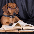Stock Photo: Clever dog in glasses