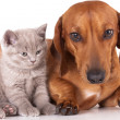 Foto Stock: Cat and dog