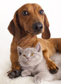 Chat et chien — Photo