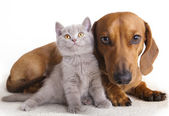 Katt och hund — Stockfoto