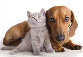 Kočka a pes — Stock fotografie