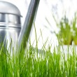 Garden tools and watering can with grass on white — Stock Photo #5032184