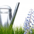 Watering can with grass and garden tools on white — Stock Photo #5032271
