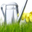 Watering can in grass with white background — Stock Photo