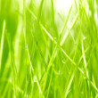 Fresh green grass background - Stok fotoğraf