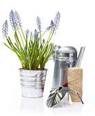 Gardening tools and houseplants - still life — Stock Photo