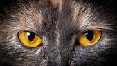 Kočičí oči. — Stock fotografie