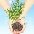 Hand with a plant — Stock Photo #4636224
