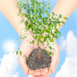 Hand with a plant — Stock Photo