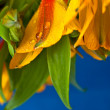 Closeup Beautiful Yellow Wild Orchid — Stock Photo