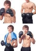 Boxer — Stock fotografie