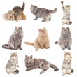 Cats in different poses — Stock Photo #5345203