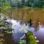 Autumnal lake — Stock Photo #4009365