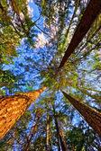 Yaz ben orman — Stok fotoğraf