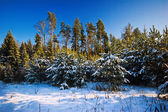 Campo del invierno — Foto de Stock