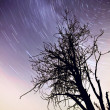 Stock Photo: Star Trails