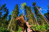Verão da floresta eu — Foto Stock