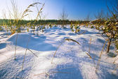 Winter field — Стоковое фото