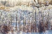 冻的草 — 图库照片