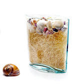 Shell and a vase with seashells — Stock Photo