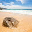 Exotic tropical beach - Stock Photo