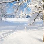 Winter park — Stock Photo #5245969