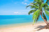 Tropical beach with coconut palm. Koh Lanta, Thailand — Stock Photo