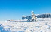 Zimní park se sněhem — Stock fotografie