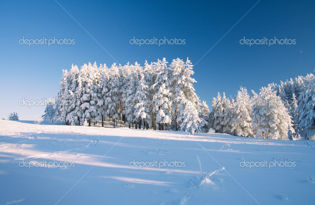 Snow field and forest under blue sky with crescent — Stock Photo #5246085