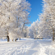 Stock Photo: Winter park