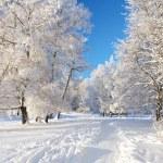 Winter park — Stock Photo #5274553