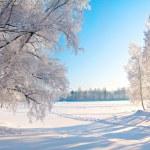 Winter park — Stock Photo #5274556