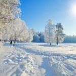 Winter park — Stock Photo #5274595