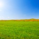 Green field — Stock Photo #5275727