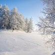 Winter forest and lake — Stock Photo