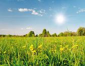 Campo verde com flores — Fotografia Stock