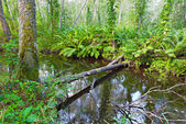 River in beautiful forest — Stock Photo