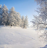 Winter forest and lake — Stockfoto
