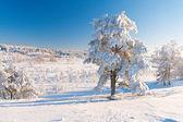Park zimą w śniegu — Zdjęcie stockowe