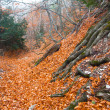 Autumn ancient forest - Stock Photo