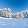 Snow field and forest under blue sky with crescent — Stock Photo
