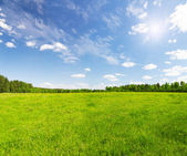 Green field with flowers under blue cloudy sky — Stock Photo